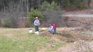 Working in the strawberry patch