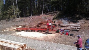 Milling hemlock trees for wood