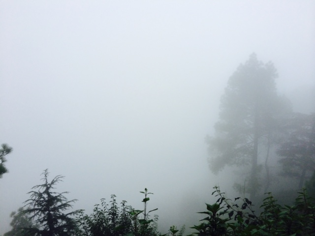 Deep in the cloud of McLeod Ganj