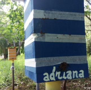 Beekeeping Project