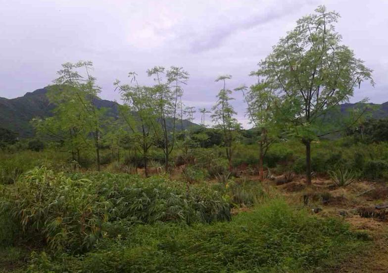 Moringa Project